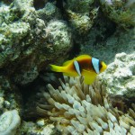 red sea 12