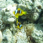 red sea 8